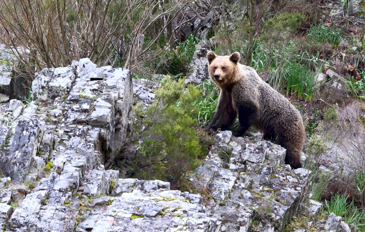 Observación fauna - Tras las huellas del oso